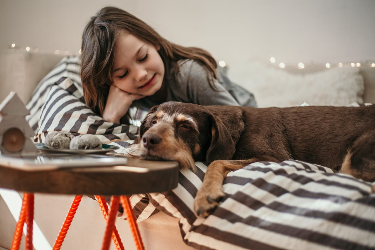Spay and Neuter Surgery in Monongahela: Dog Laying on Bed With Young Girl